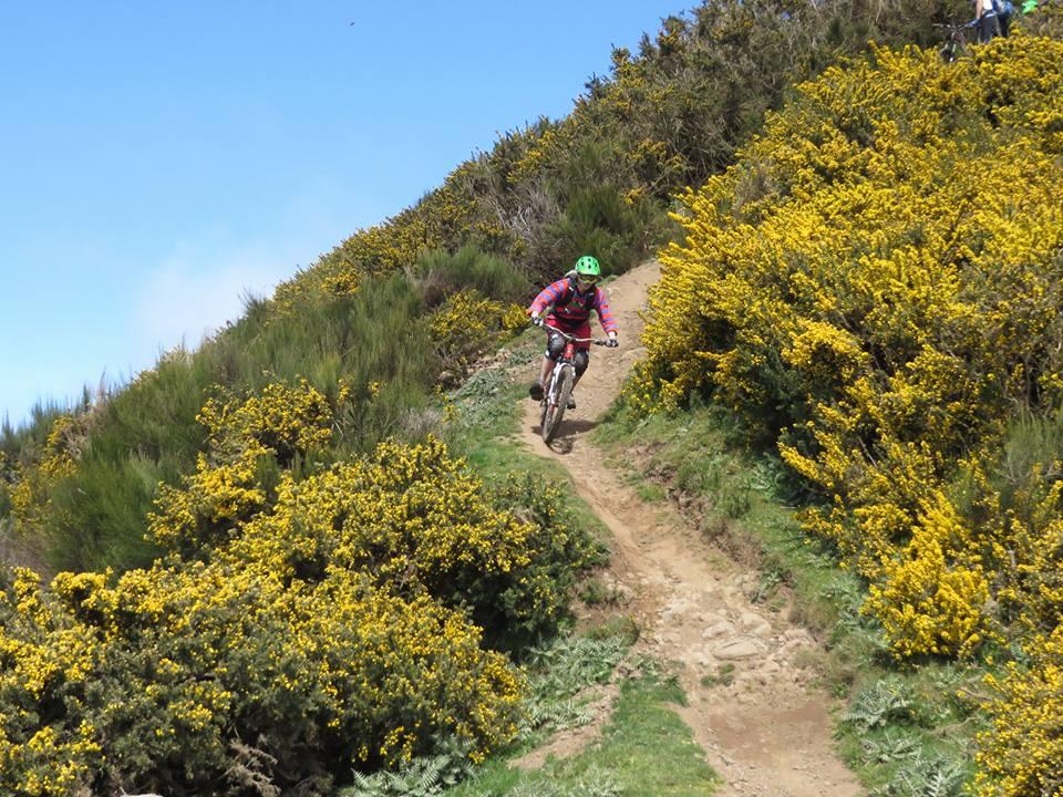 Madeira na kole