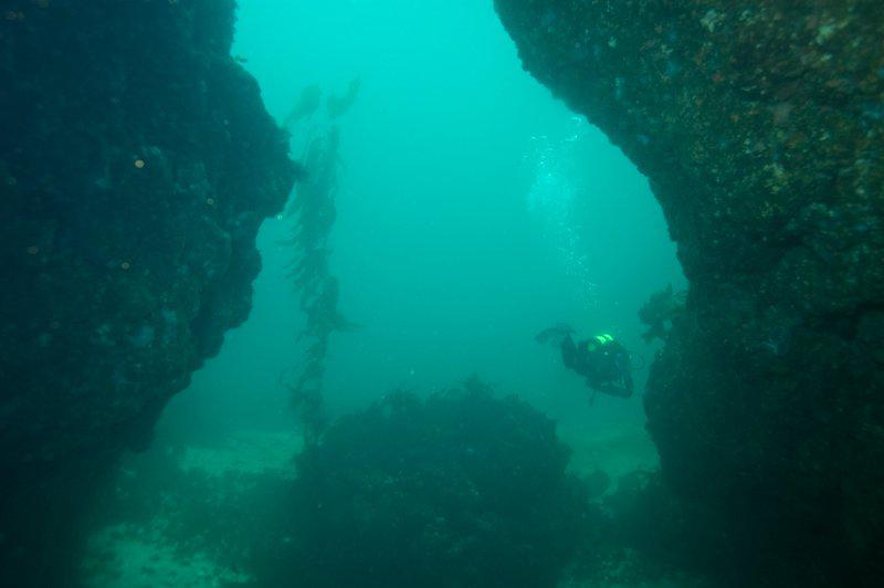 Anacapa Islands Diving, California